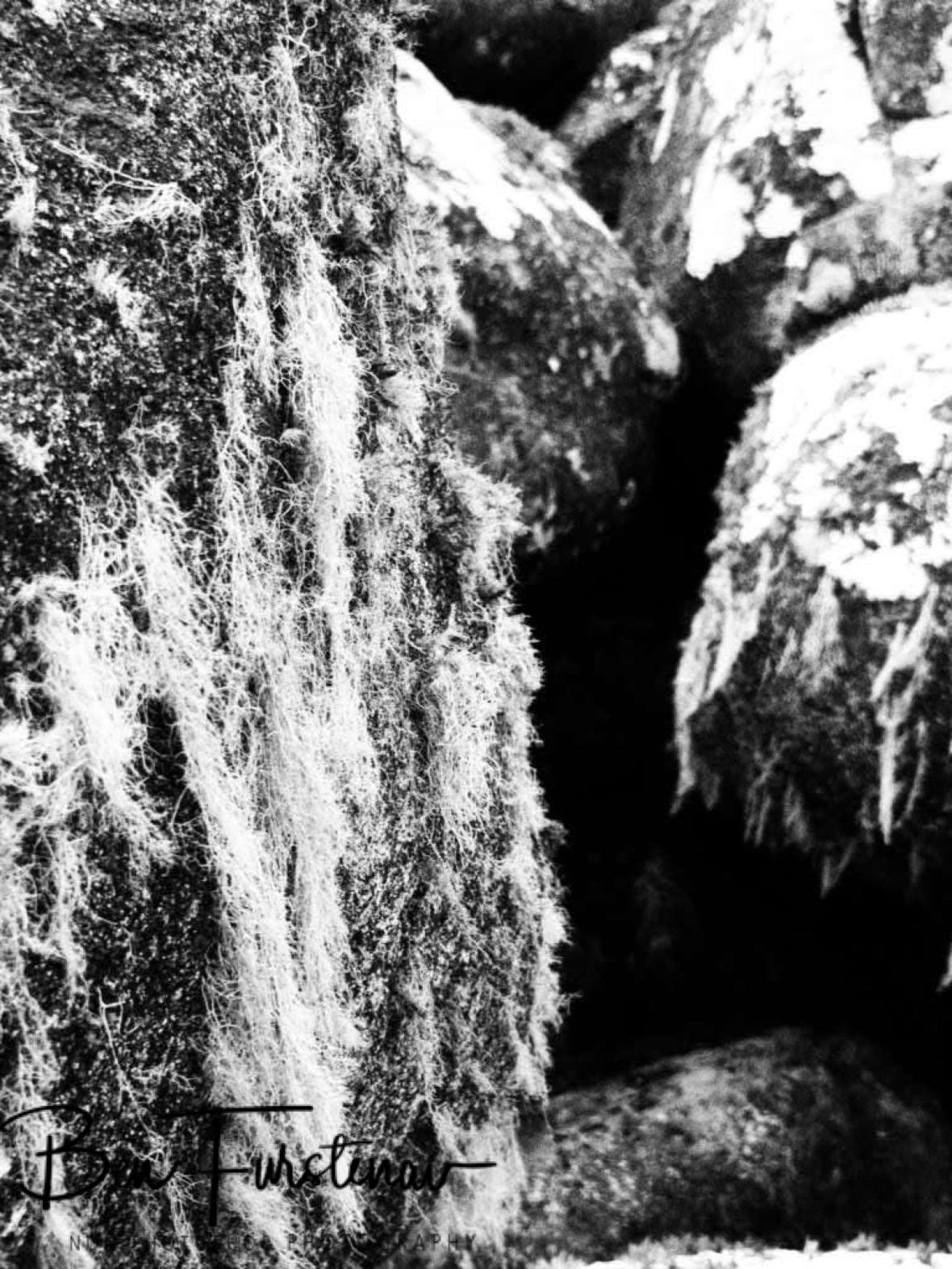 Moss covered granite boulders, Mulanje Mountains, Malawi