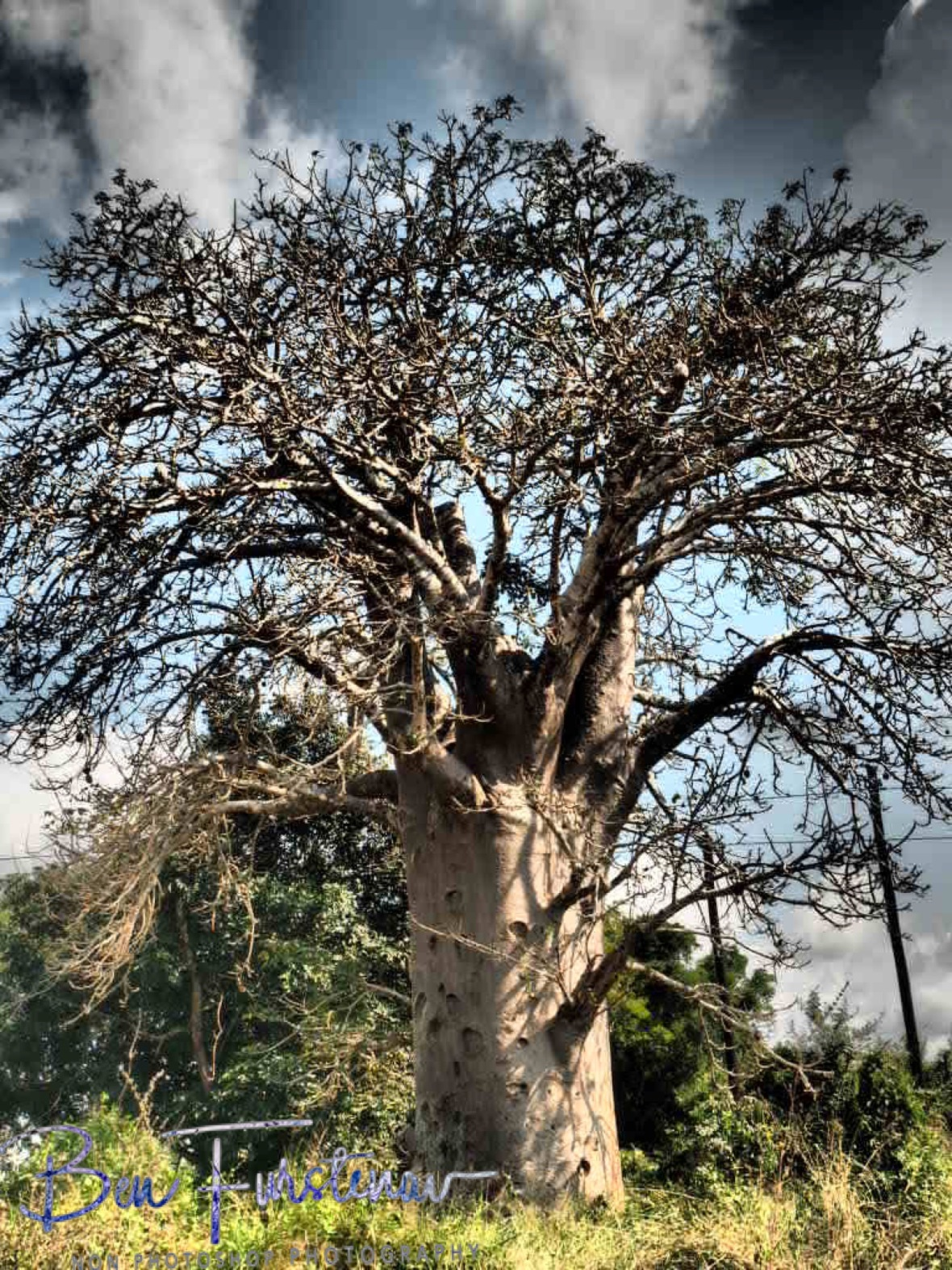 The magic Baobab tree, Vilankulo, Mozambique