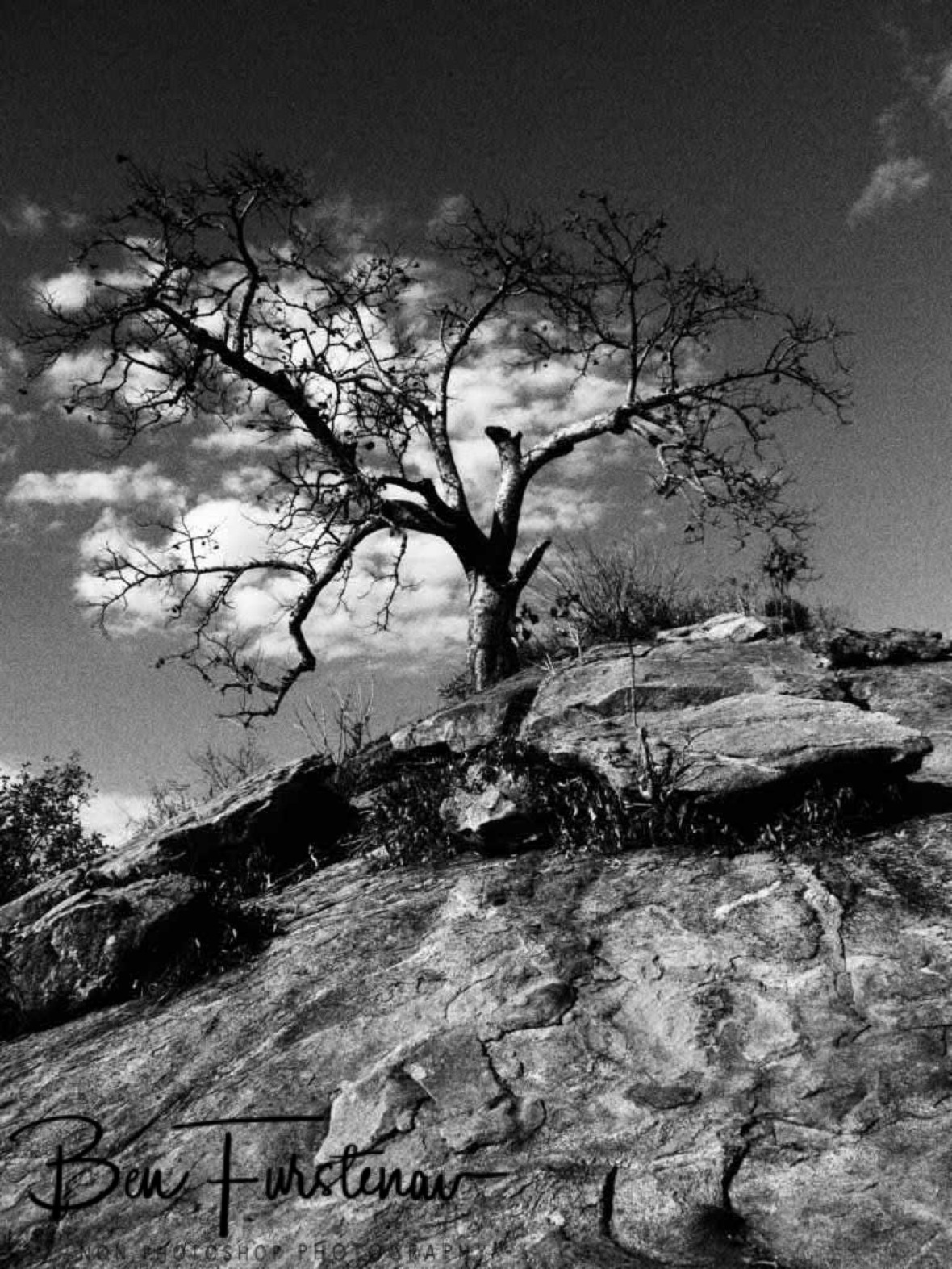 One tree hill in Black and White, Mwanza Region, Malawi