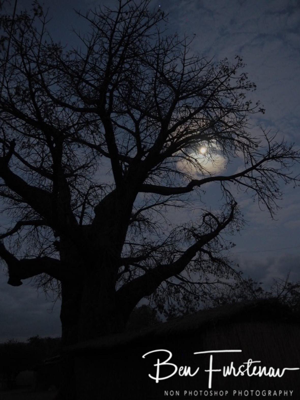 Moon behind Baobab tree, Chembe, Cape MaClear, Lake Malawi, Malawi