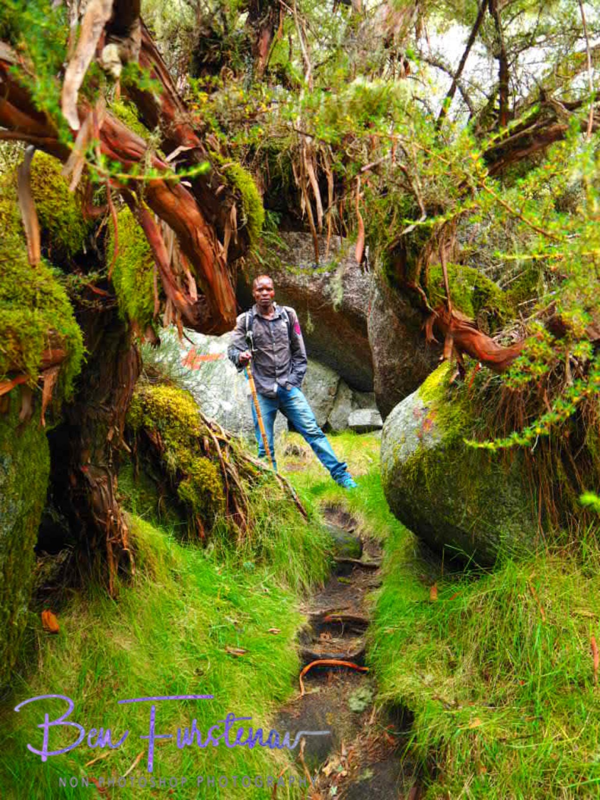 Nenani in lush green alpine tropics, Mulanje Mountains, Malawi