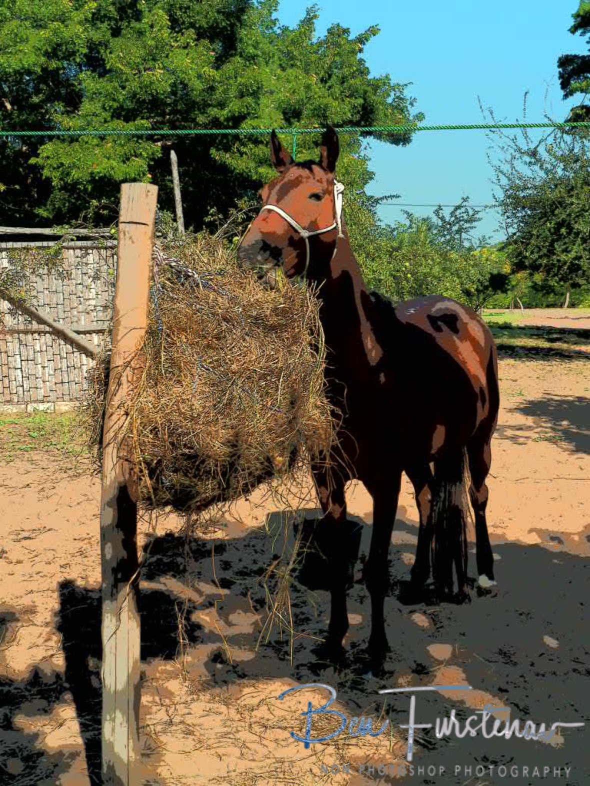 Hungry Horse, Vilankulo, Mozambique
