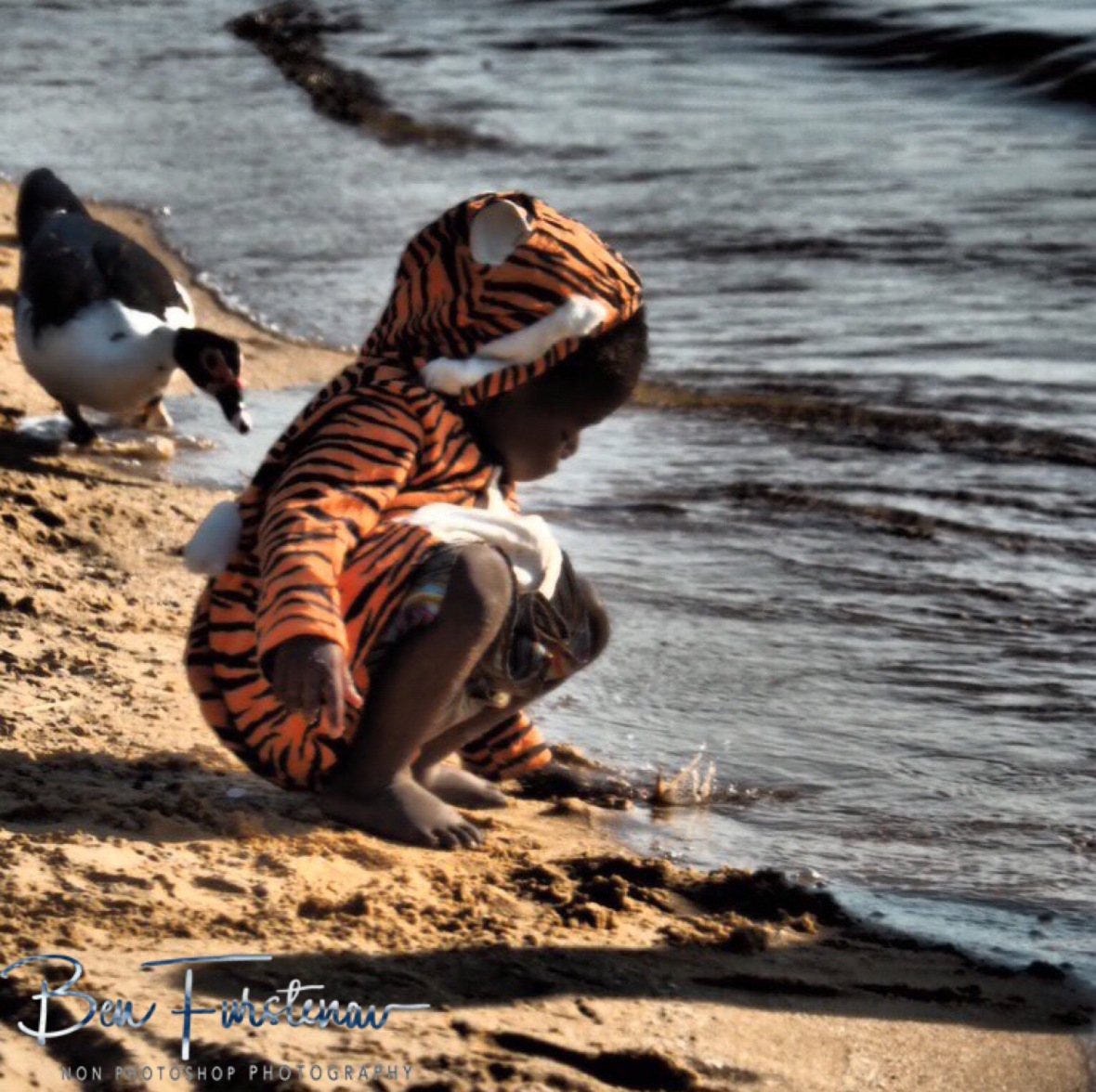 Tigers and ducks in Chembe, Cape Maclear, Lake Malawi, Malawi