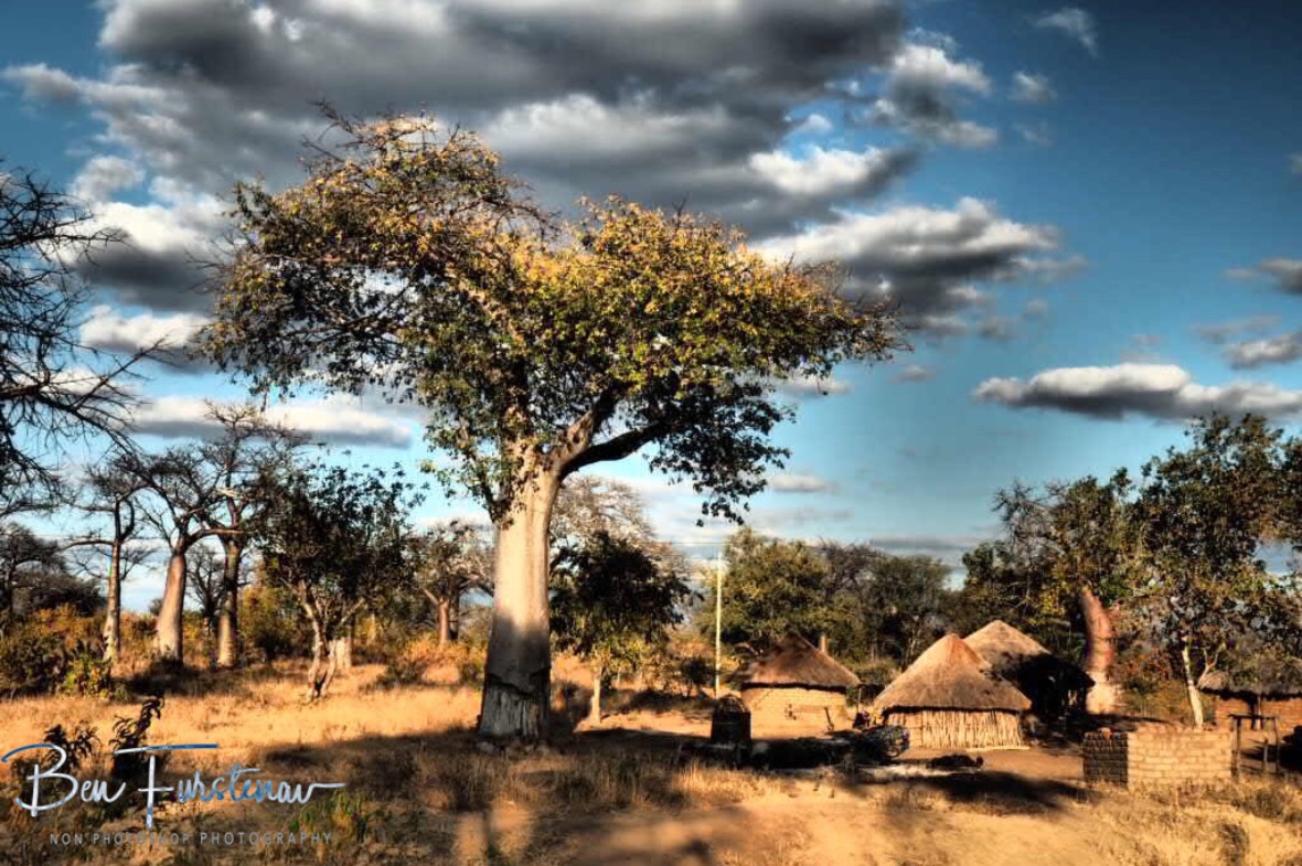 Baobab community, Tete, Mozambique