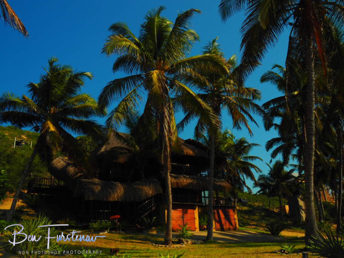 Palm tree alley, Barra beach, Inhambane, Mozambique
