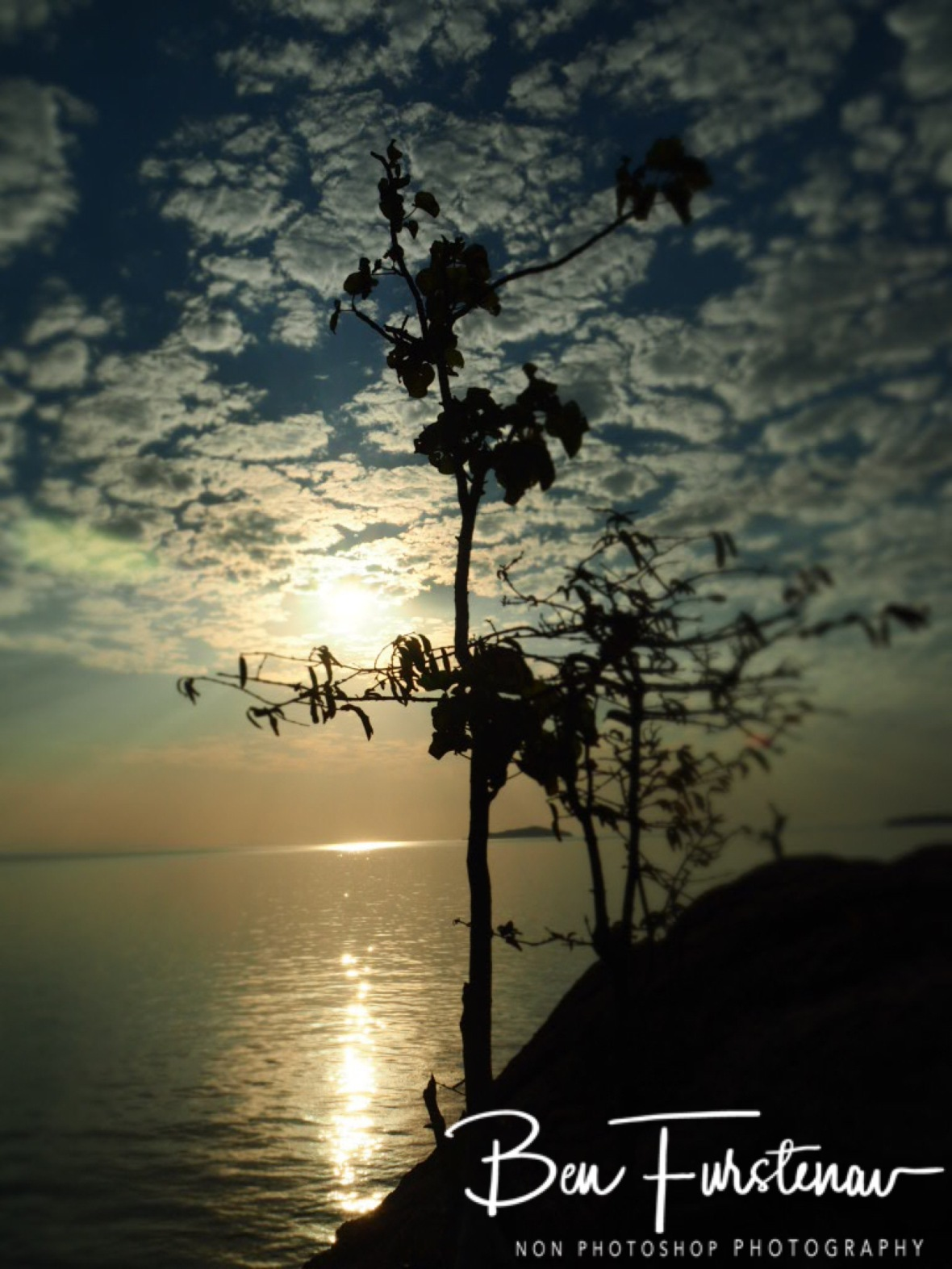 Plants growing on rocks at sunset, Otter Point, Cape MaClear,  Lake Malawi, Malawi