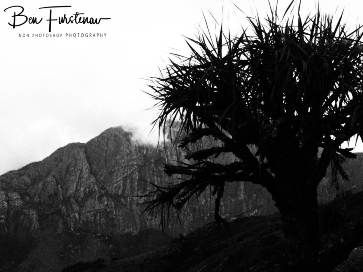 Chambe Plateau in Black and white, Mulanje Mountains, Malawi