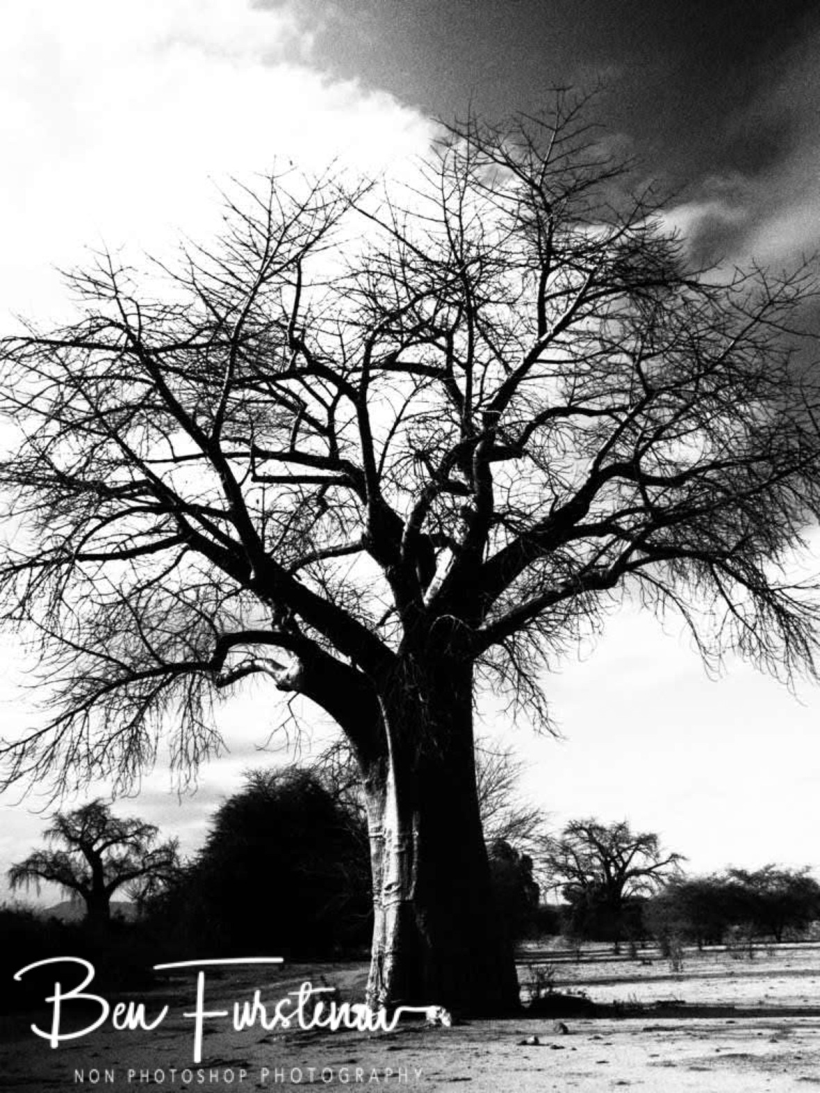 Baobab forrest Black and white, Tete, Mozambique