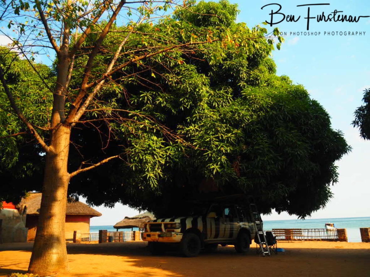 Zimba's mango tree umbrella at 'Fat Monkey's', Chembe, Cape MaClear, Lake Malawi, Malawi