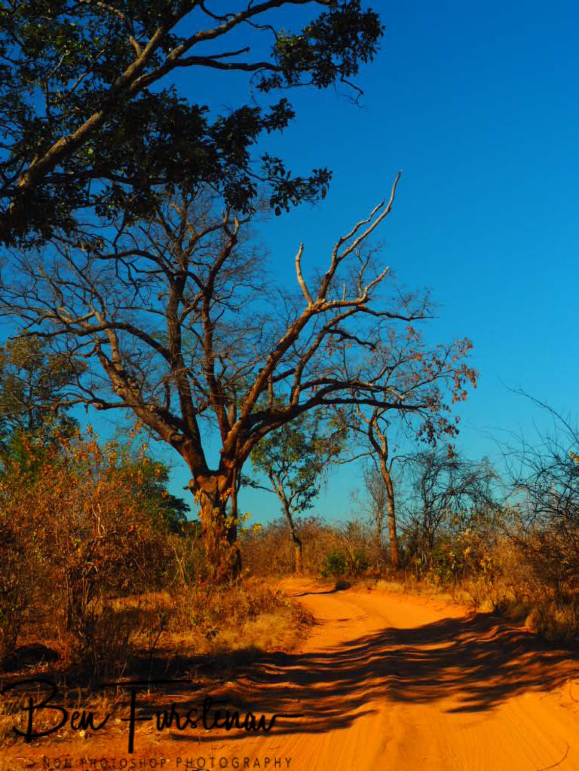 Red centre of Lower Zambezi Valley, Zambia