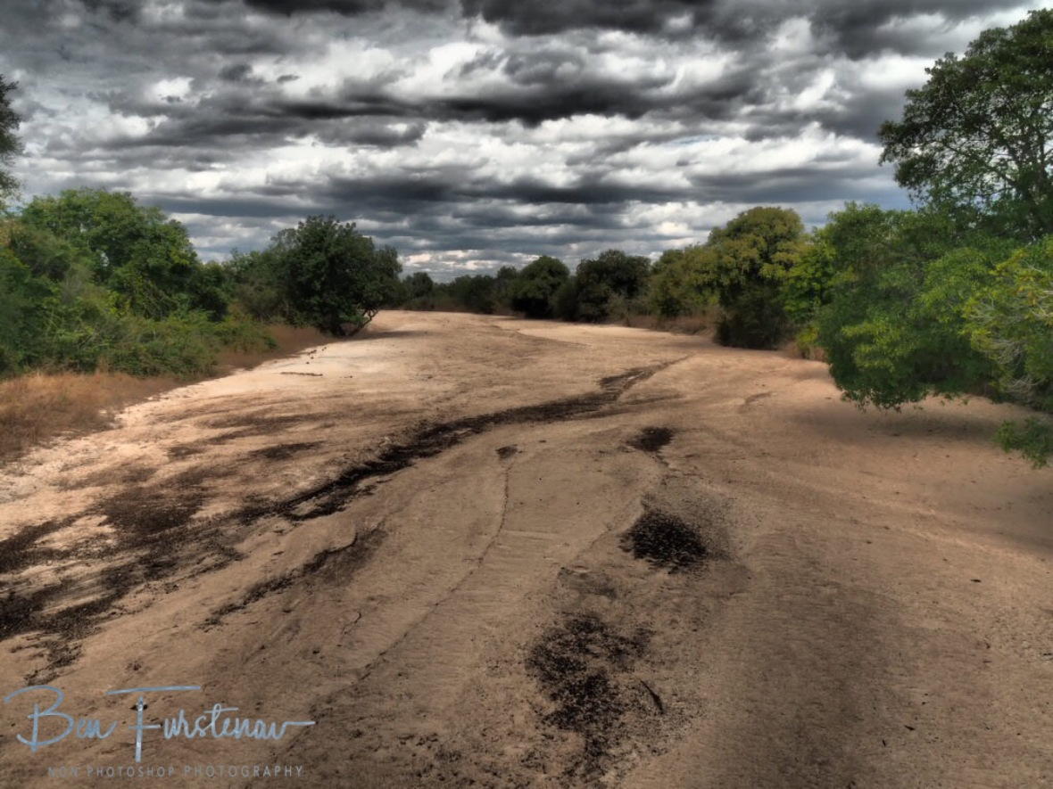Bone dry riverbed in South Luangwa National Park, Zambia