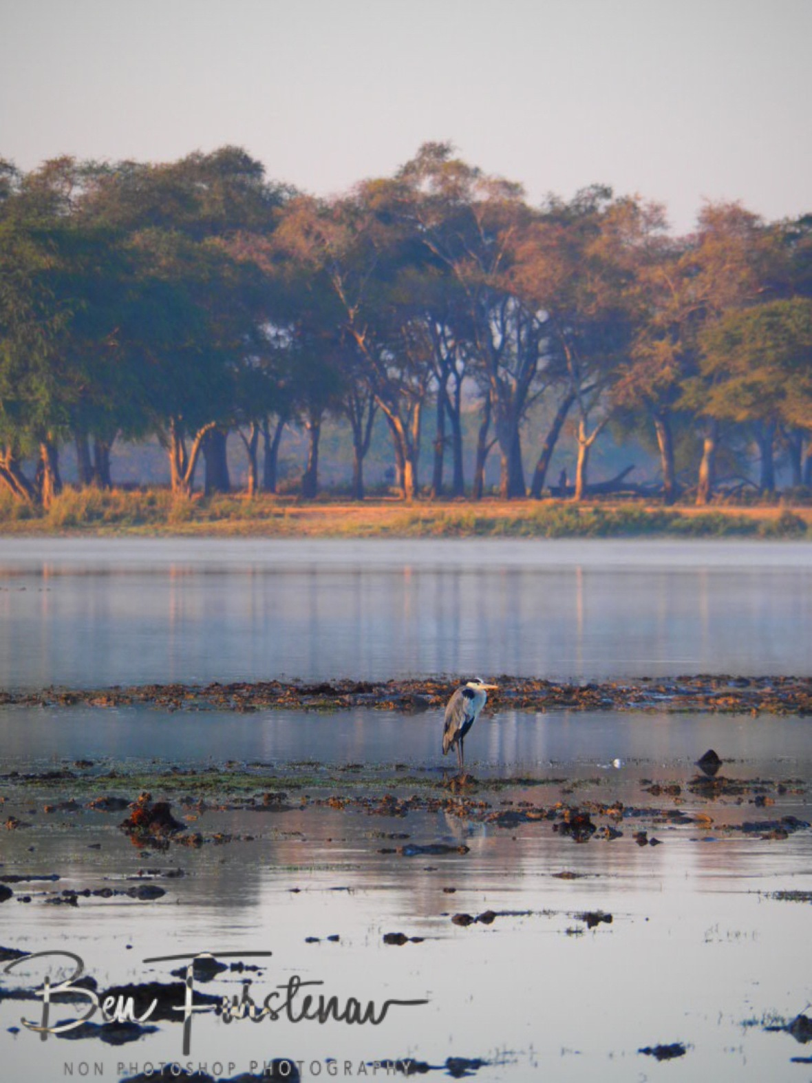 A heron enjoys calm waters at Vwaza Marsh National Reserve, Malawi