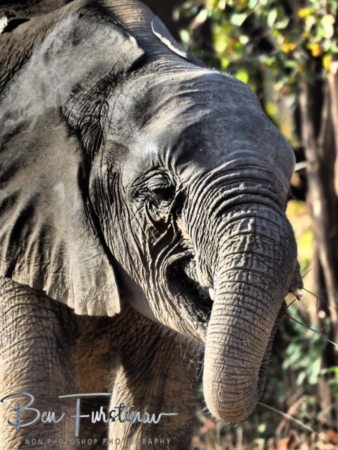 Simply gorgeous, South Luangwa National Park, Zambia