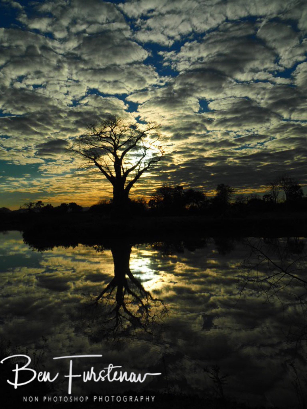 Baobab sunrise reflections, Lower Zambezi Valley, Zambia