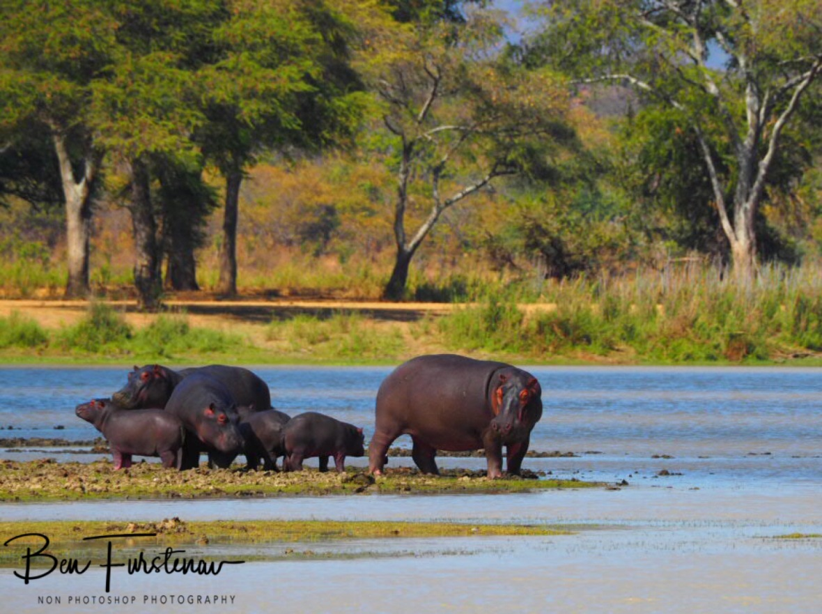 All aboard, Vwaza Marsh National Reserve, Malawi