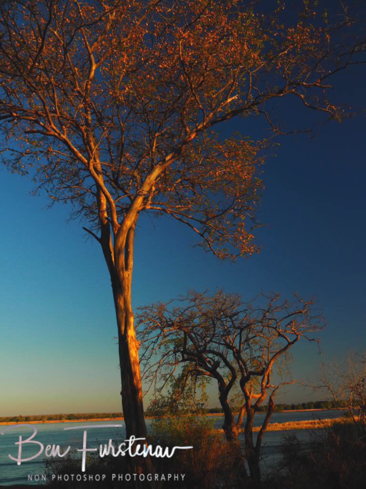 Trees on Zambezi River, Lower Zambezi Valley, Zambia