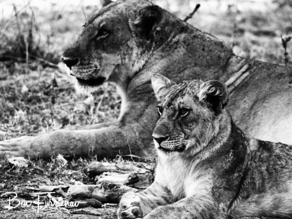 Mother and cub with the same spirit, South Luangwa National Park, Zambia