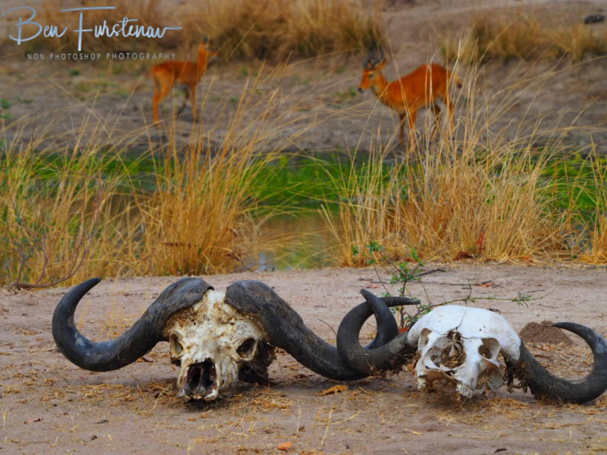 Signs of life, signs of death at South Luangwa National Park, Zambia