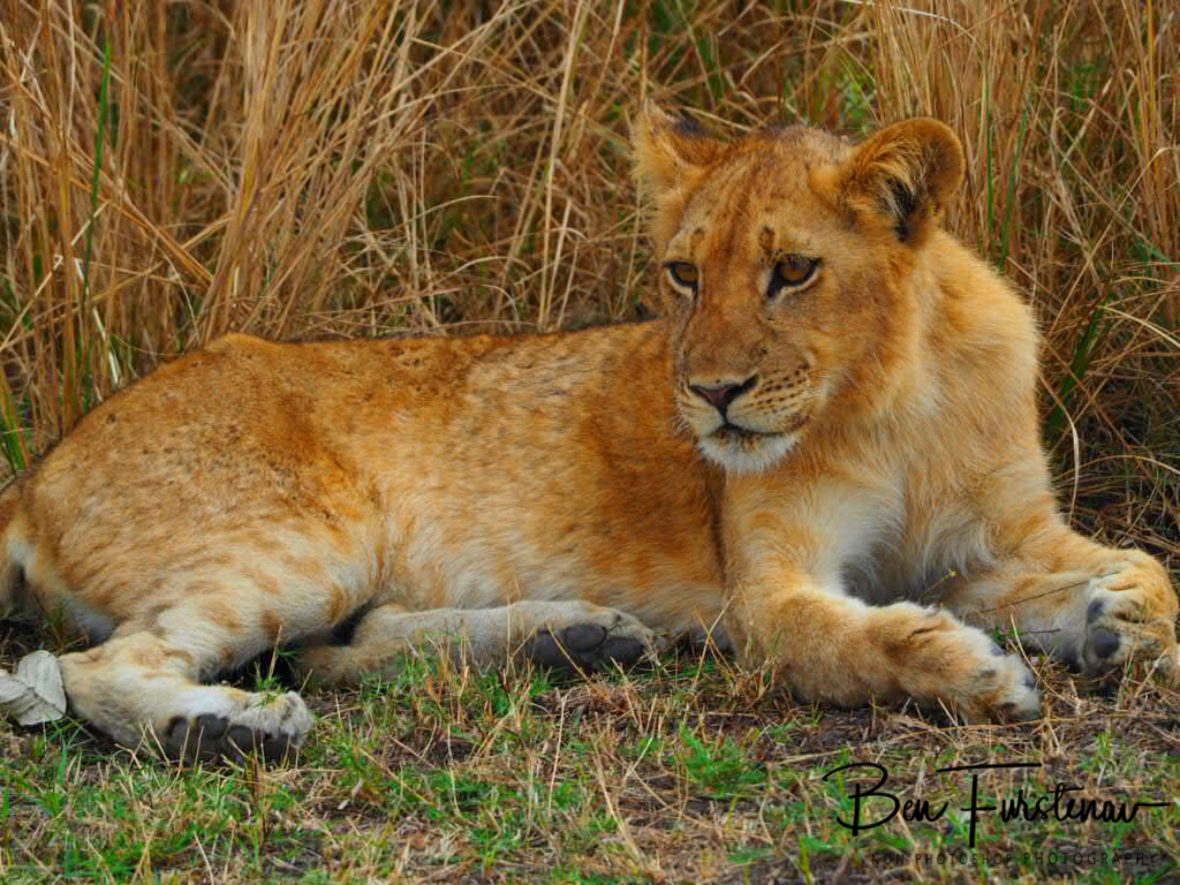 Cub is keeping an eye out too, South Luangwa National Park, Zambia