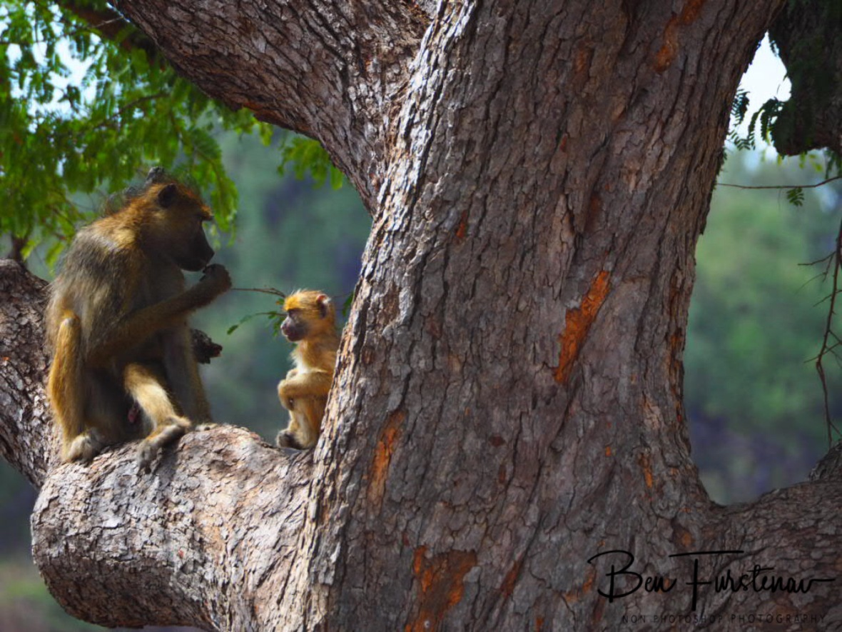 High vantage point, South Luangwa National Park, Zambia