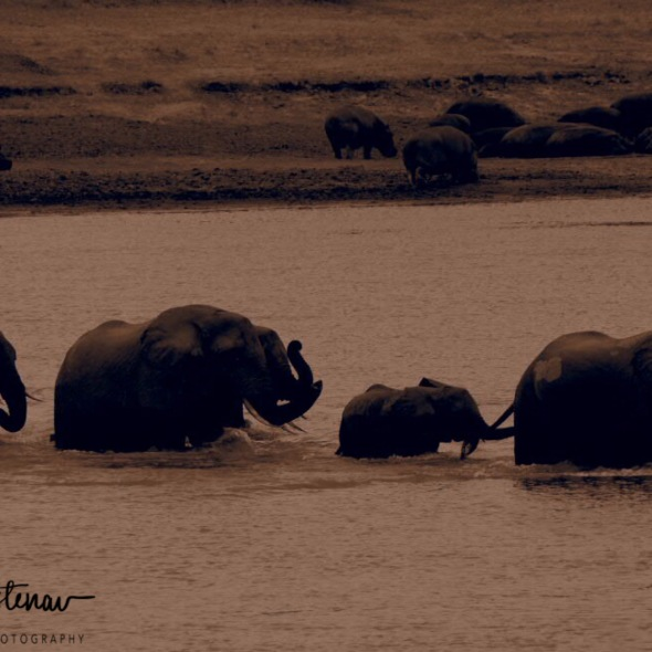 Hold on, we're coming, South Luangwa National Park, Zambia