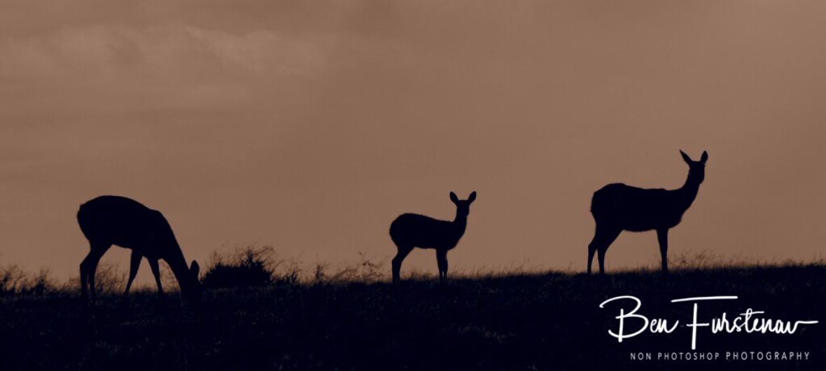 Reetbuck family on the horizon, Nyika National Park, Malawi