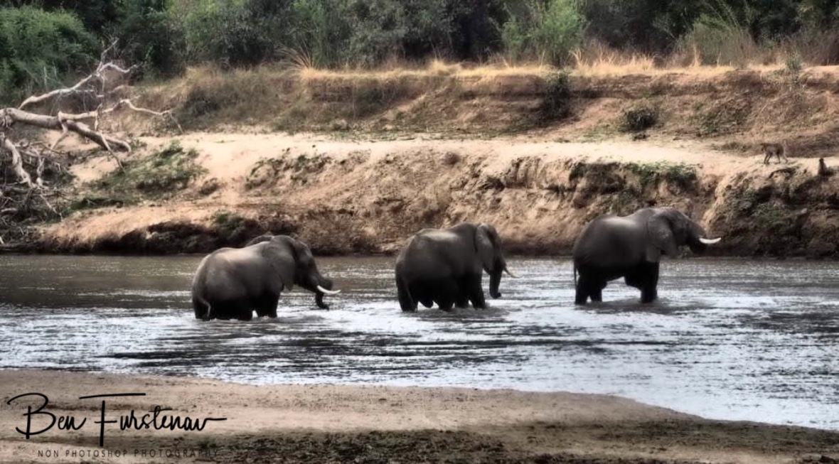 Typical river scenes in South Luangwa National Park, Zambia