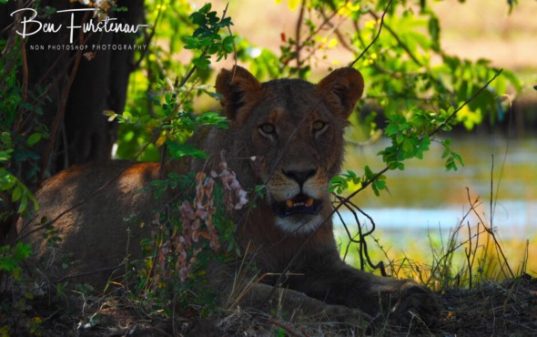Rest after the fest, Lower Zambezi National Park, Zambia