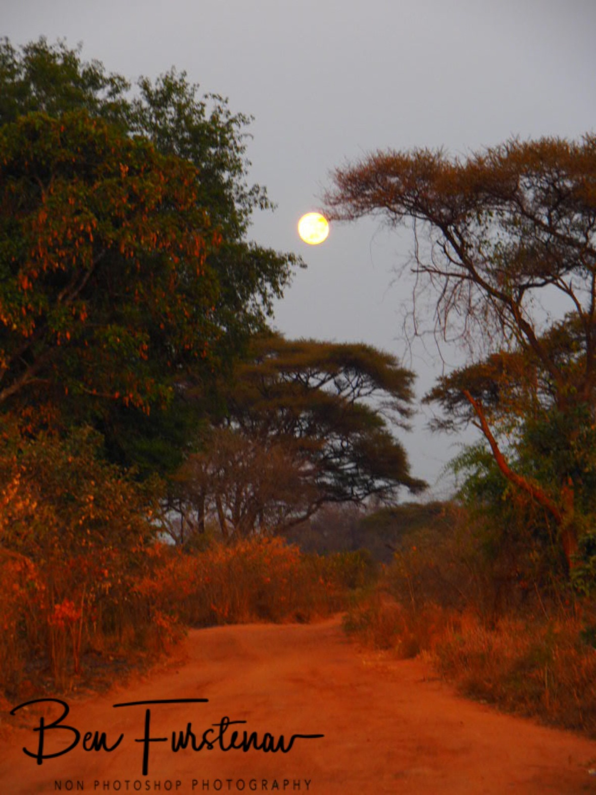 Following the full moon, Lower Zambezi Valley, Zambia
