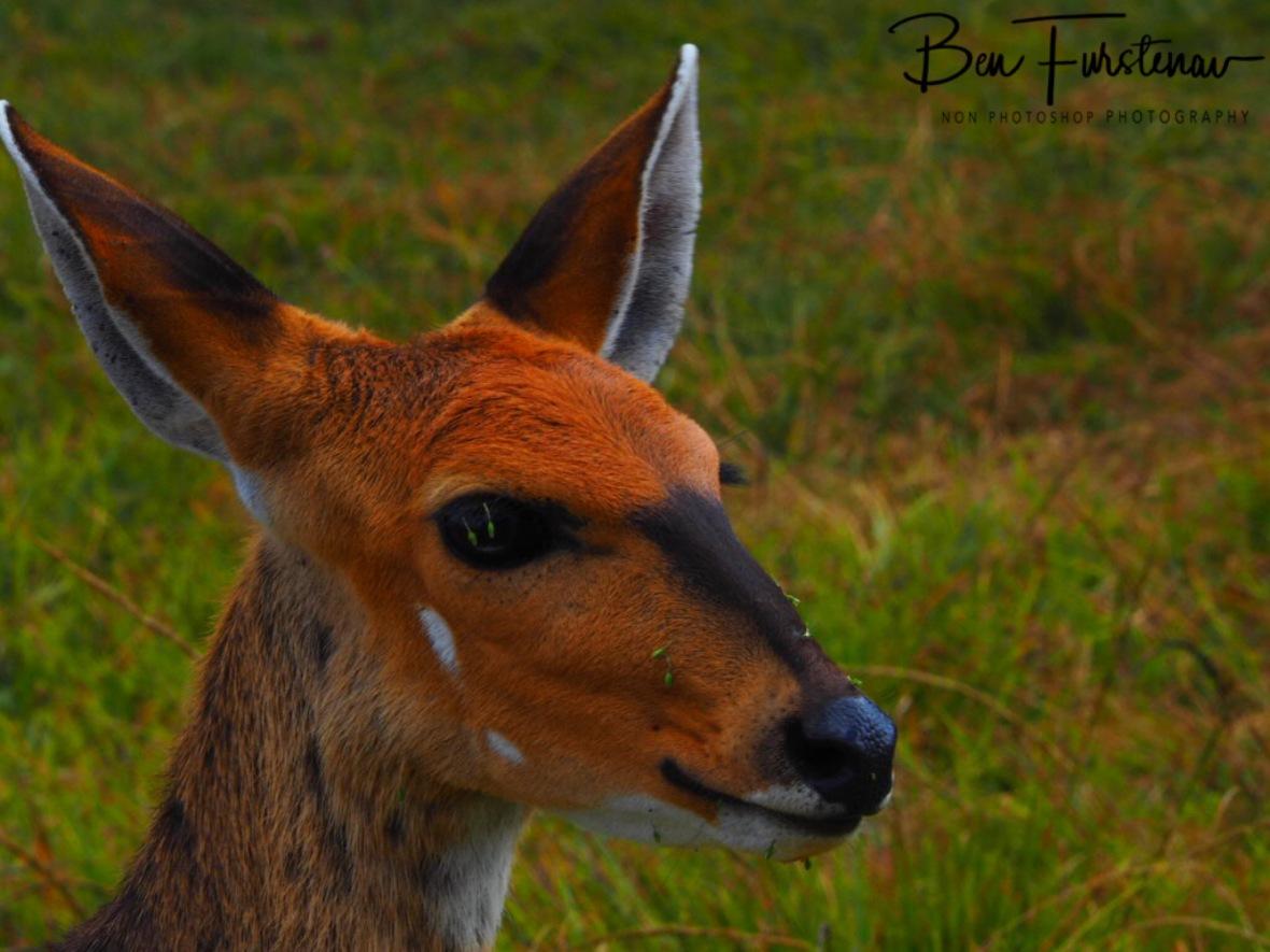 Very close up, Nyika National Park, Malawi