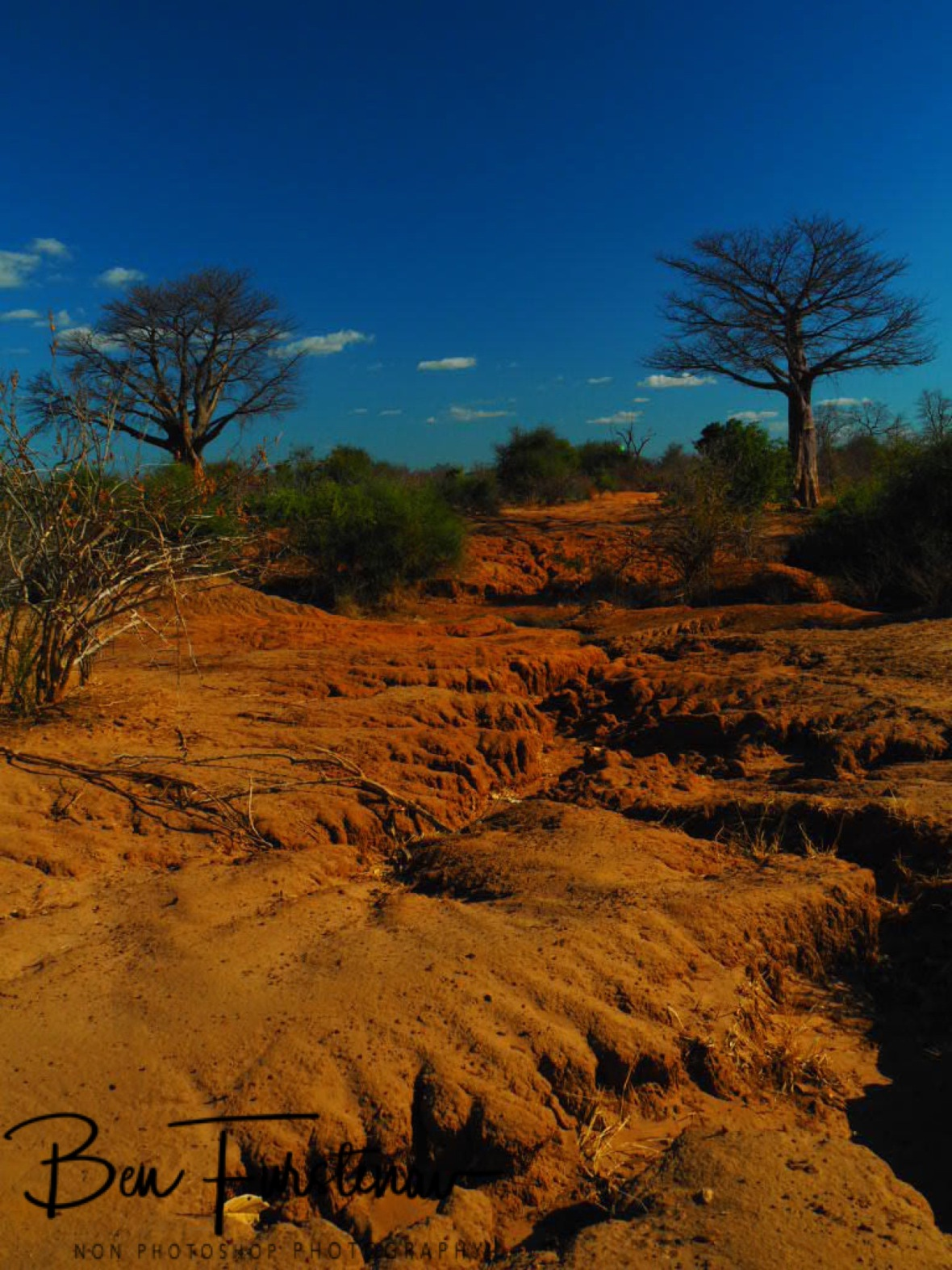 Baobab and washed out canyons, Lower Zambezi Valley, Zambia