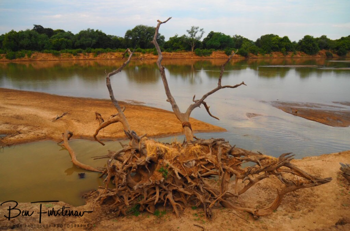 Hippo hideout, South Luangwa National Park, Zambia