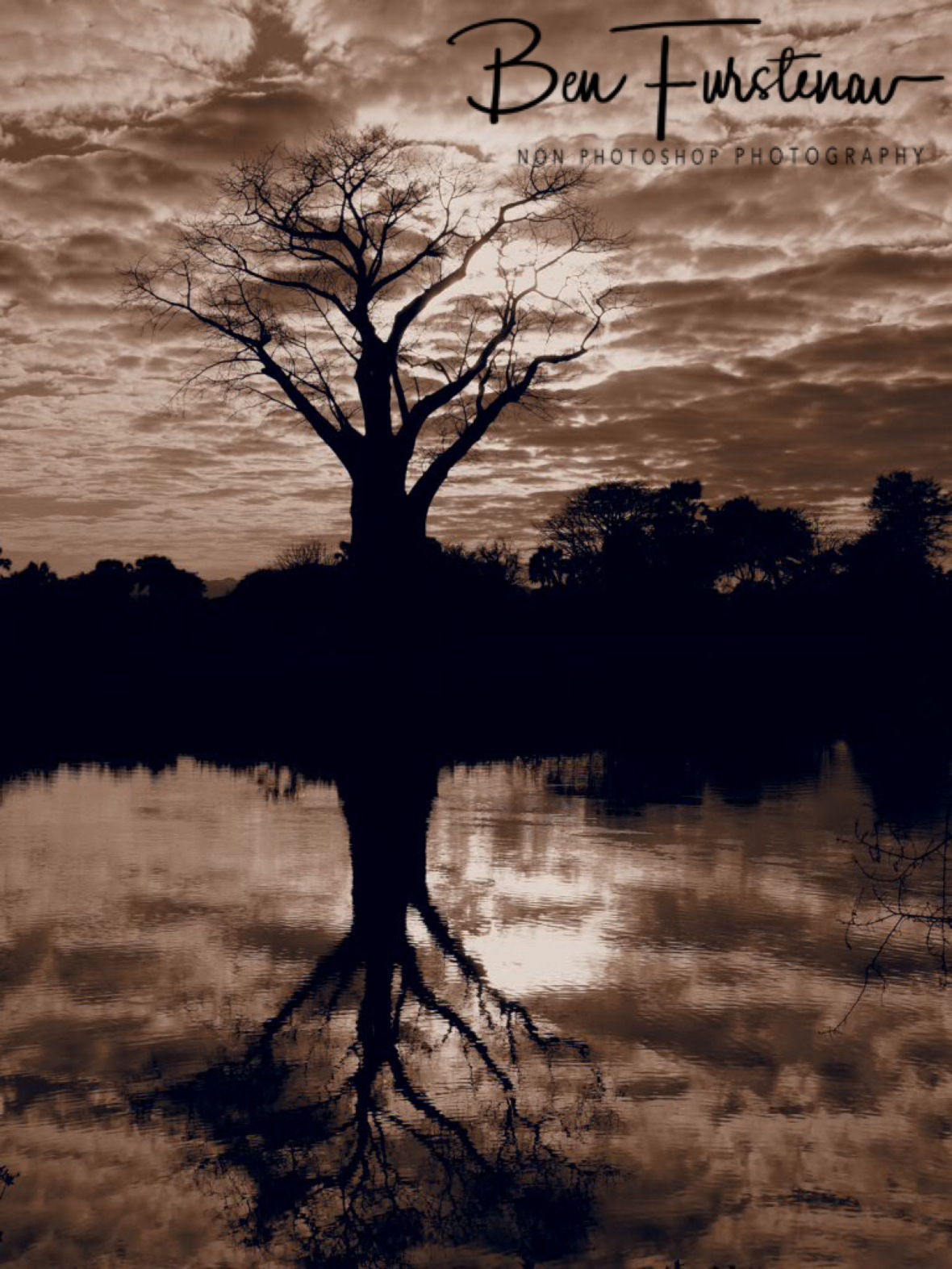Baobab reflections in sepia, Lower Zambezi Valley, Zambia