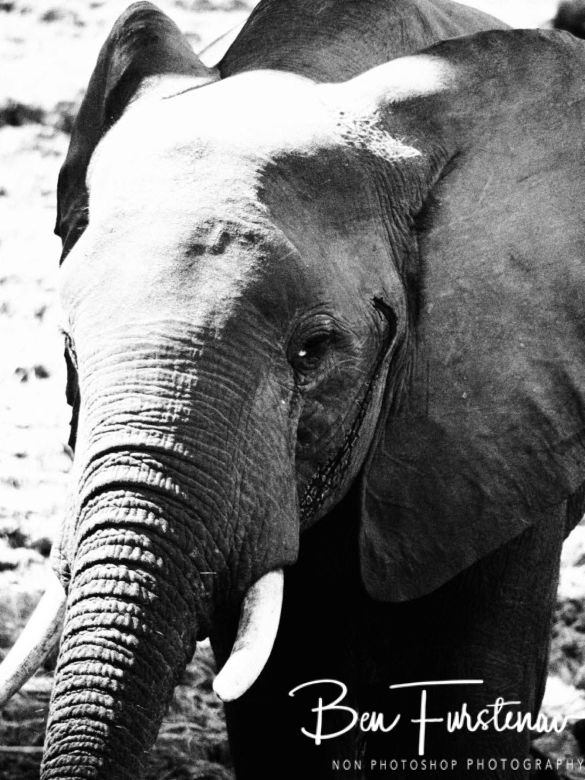 Black and white face with shadows, South Luangwa National Park, Zambia