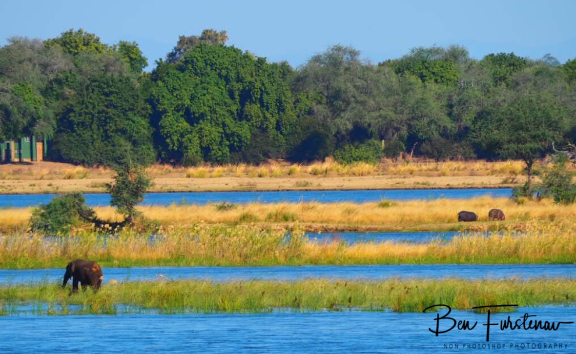 Elephants and hippos migration to Zimbabwe, Lower Zambezi Valley, Zambia