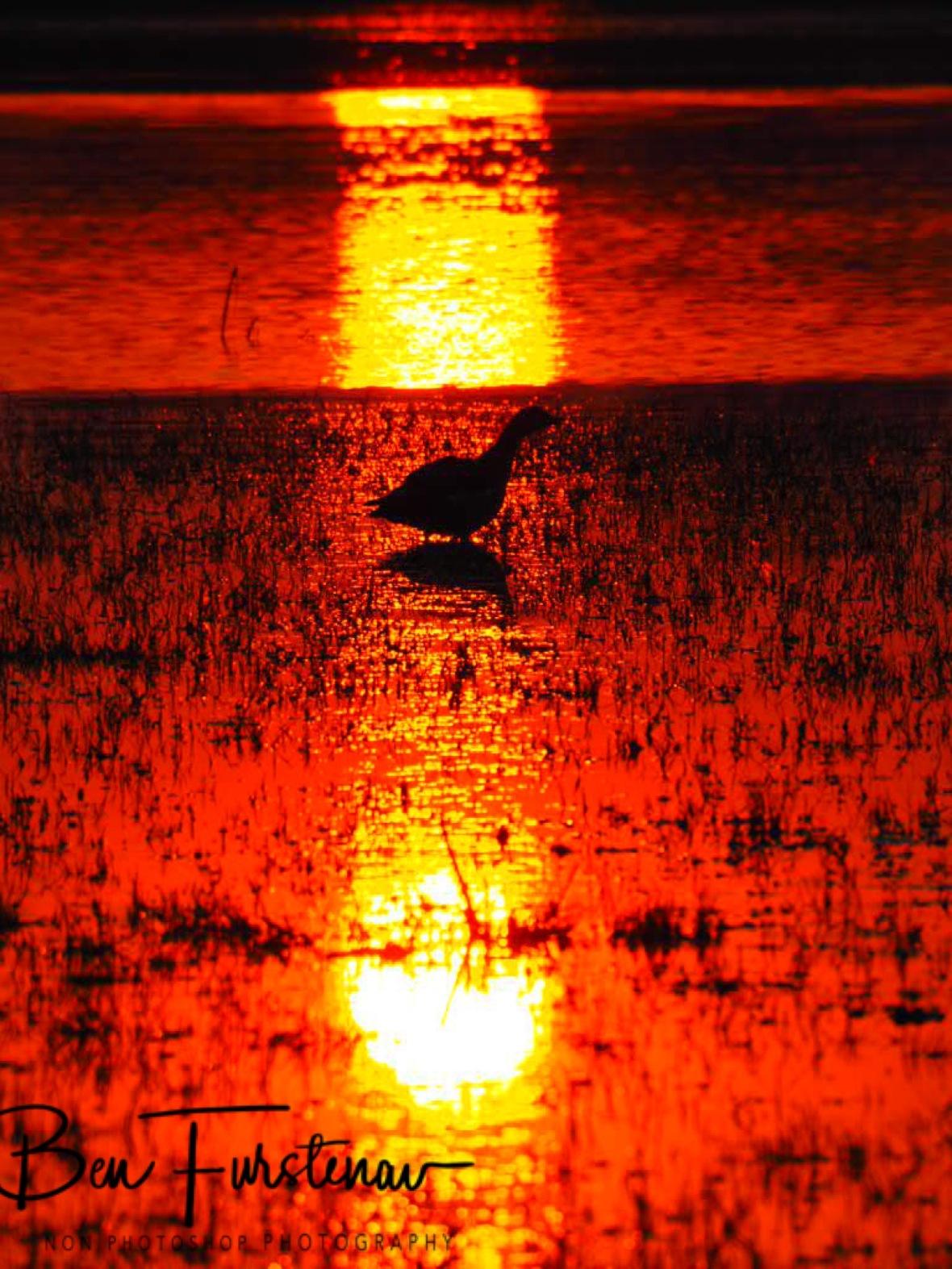 Nature's spotlight, Moremi National Park, Okavango Delta, Botswana