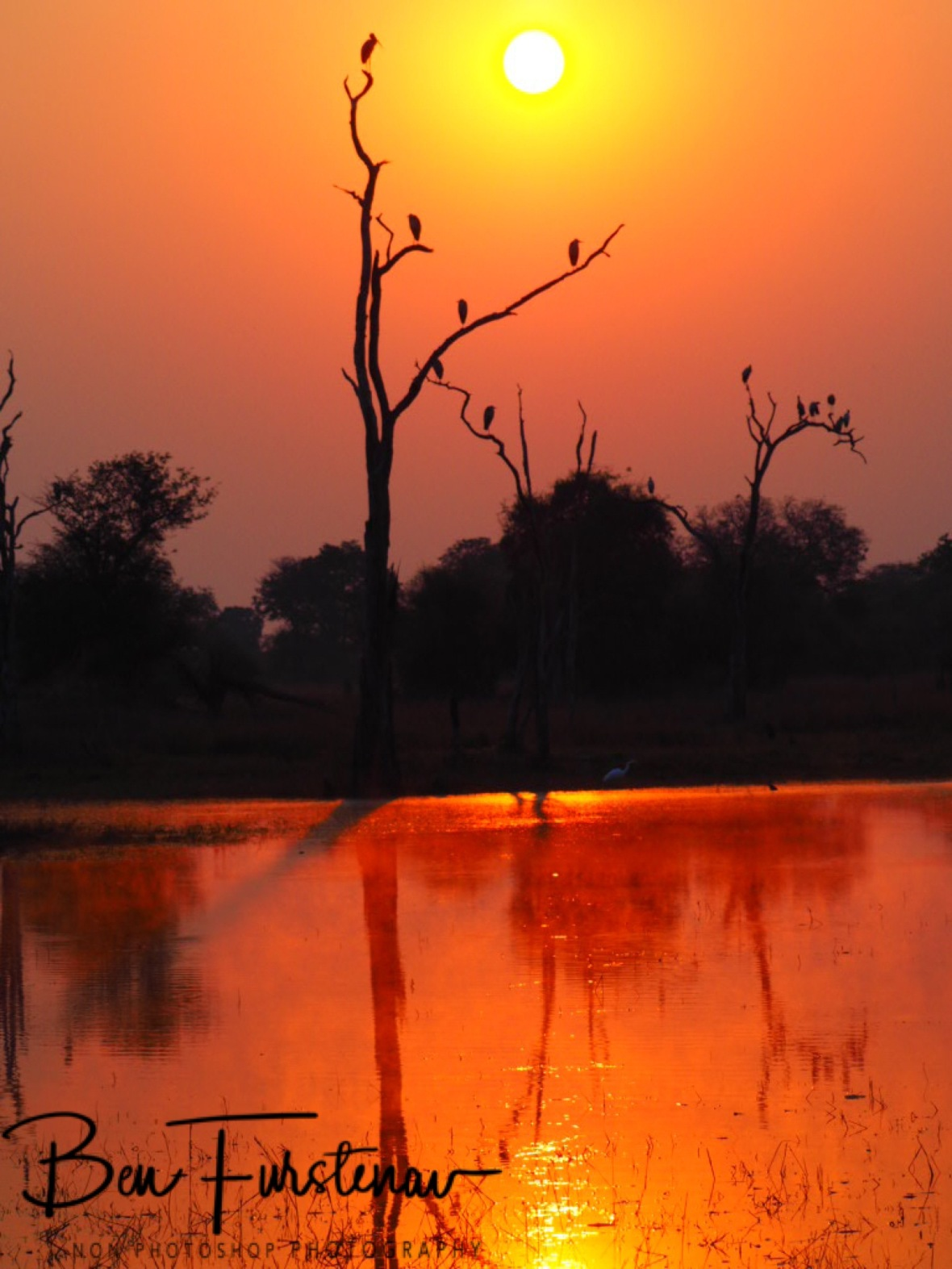 Sunny tree off birds, Kafue National Park, Zambia