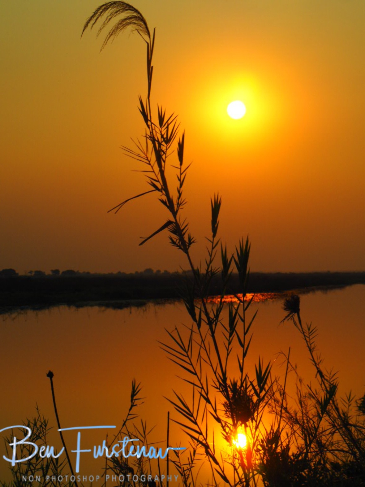 Reed sunset of calm waters, Sioma Falls, Zambia