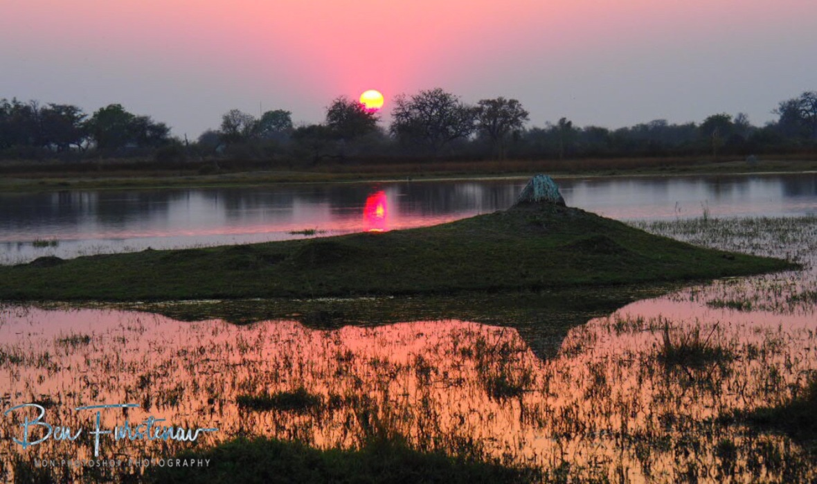 Yellow glowing sunrise at Third bridge, Moremi National Park, Okavango Delta, Botswana