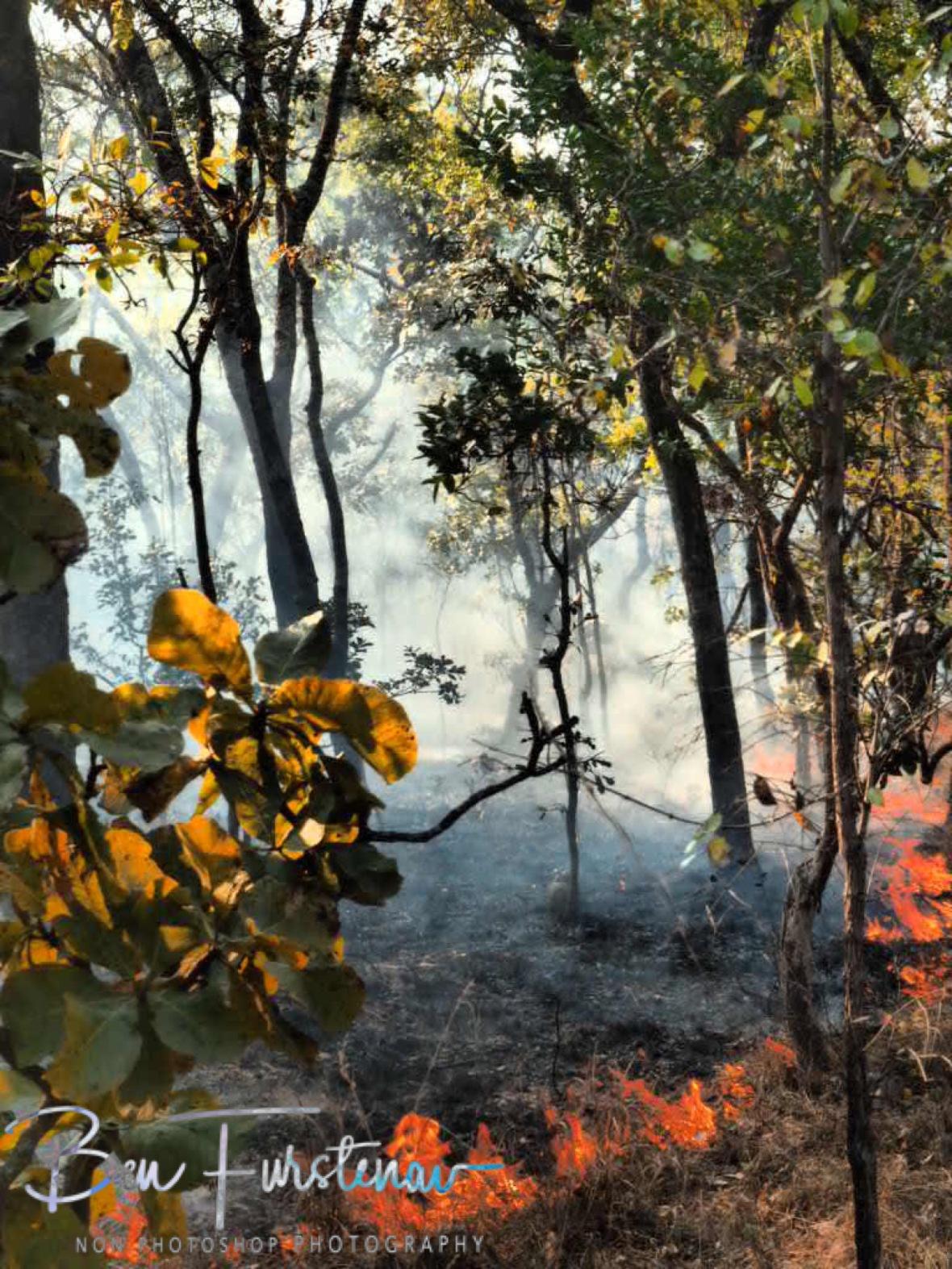 Smokey leafy forrest, Kafue National Park, Zambia