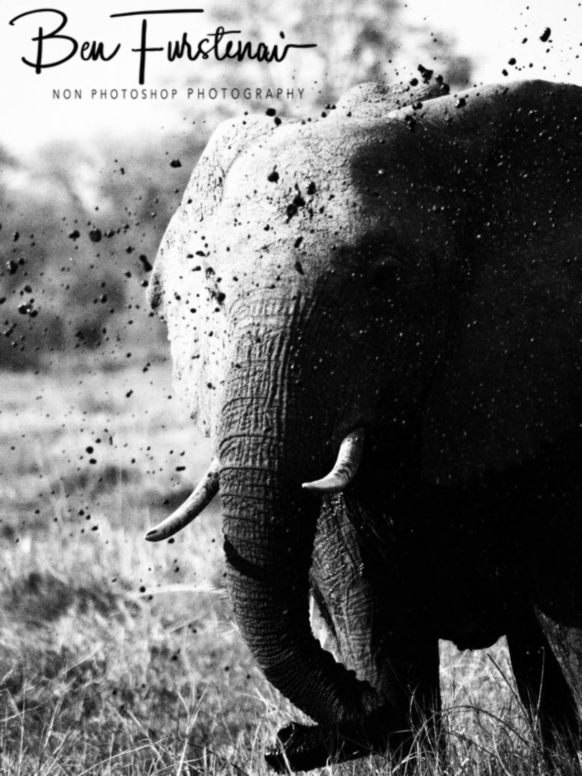 Mud shower, Moremi National Park, Botswana