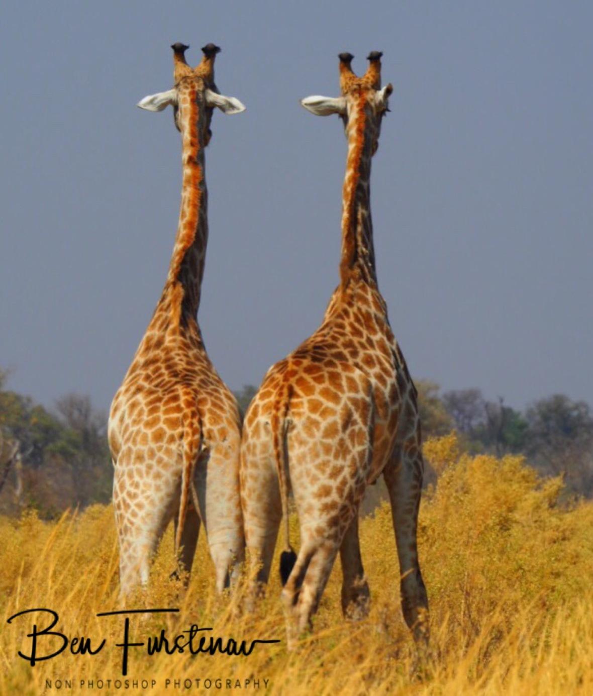Mirror image, Moremi National Park, Botswana