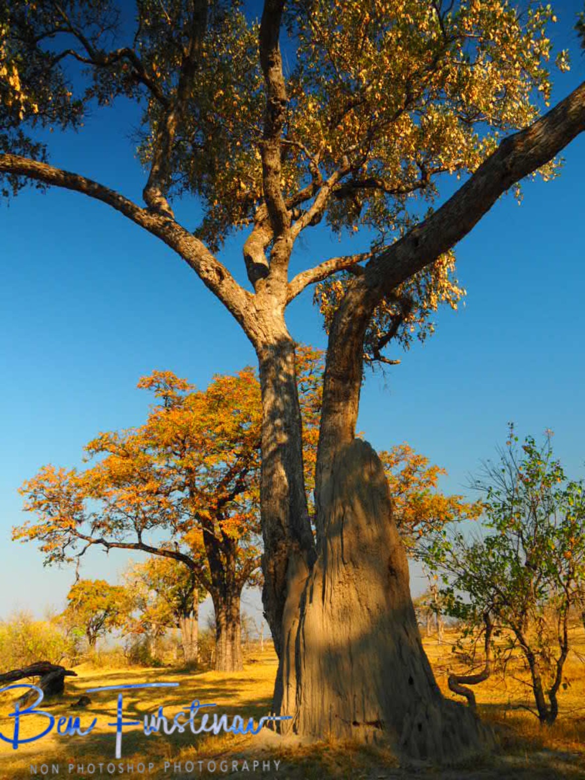 Paradise wonderland, Moremi National Park, Okavango Delta, Botswana