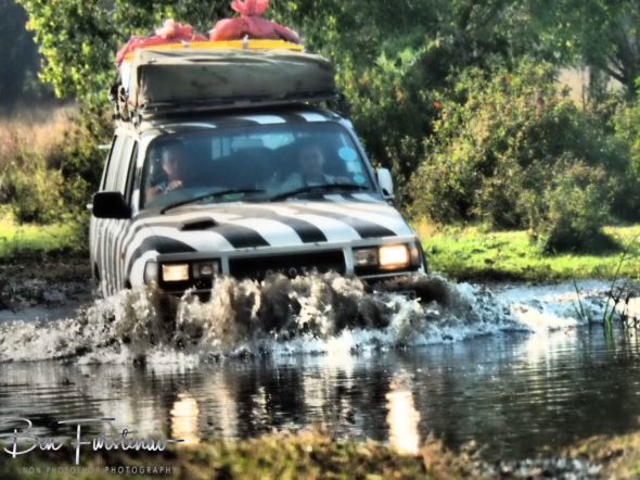 Another water crossing, Liuwa Plains National Park, Zambia
