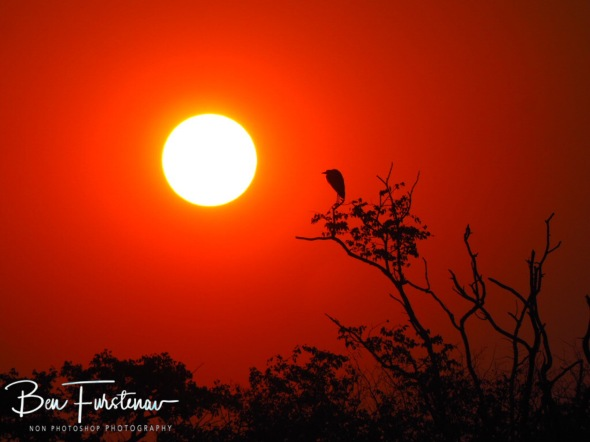 Staring at the sun, Kafue National Park, Zambia