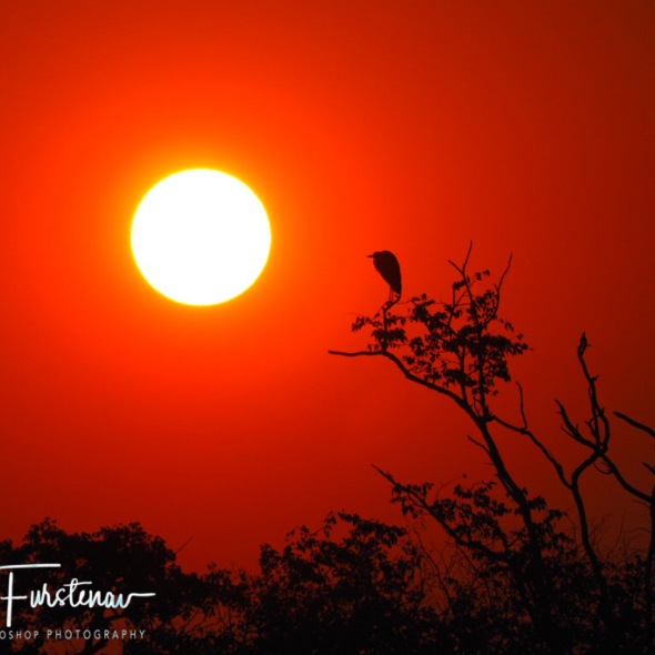 Staring at the sun, Kafue National Park, Zambia