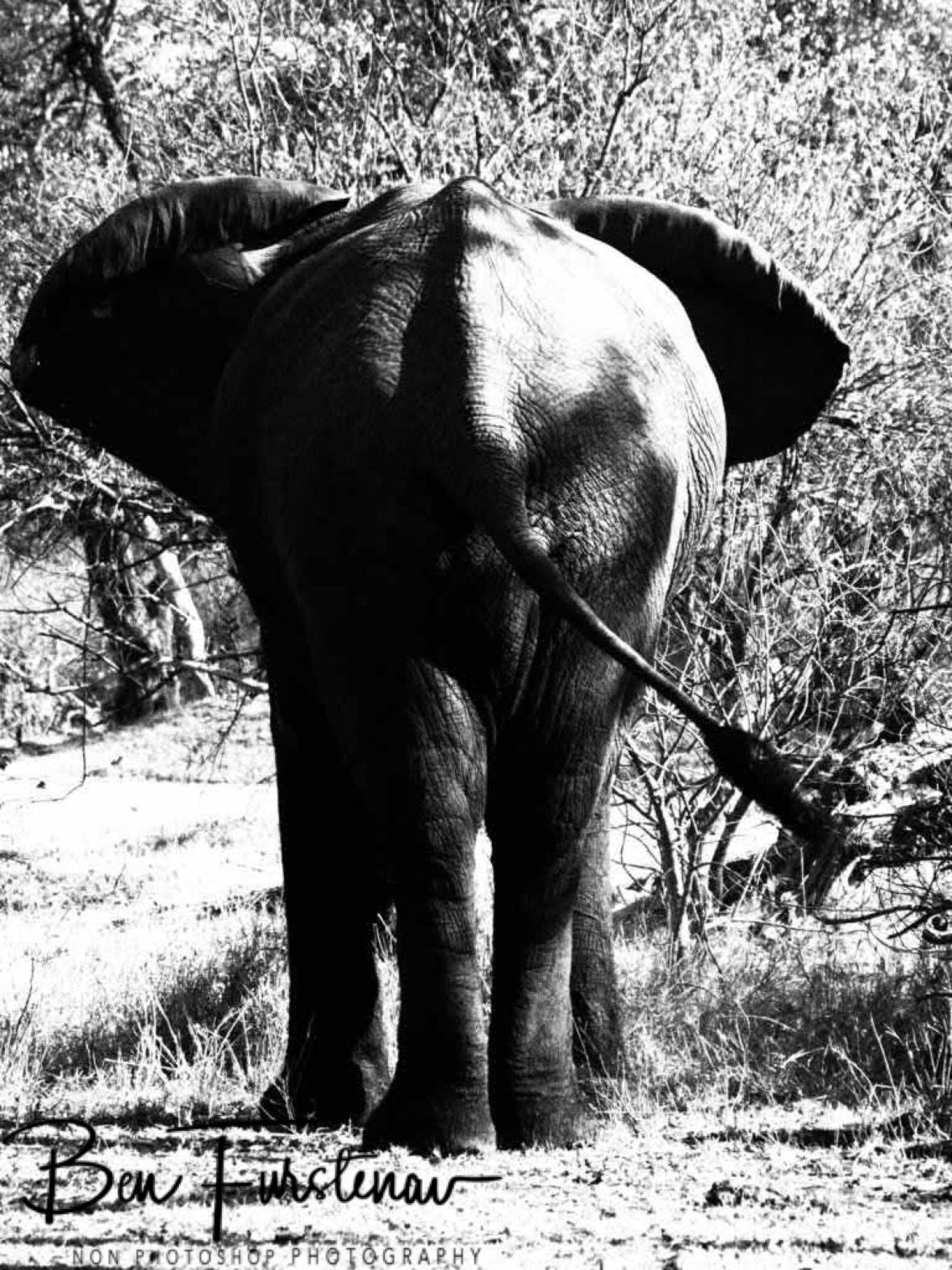 Classic photo, Moremi National Park, Okavango Delta, Botswana
