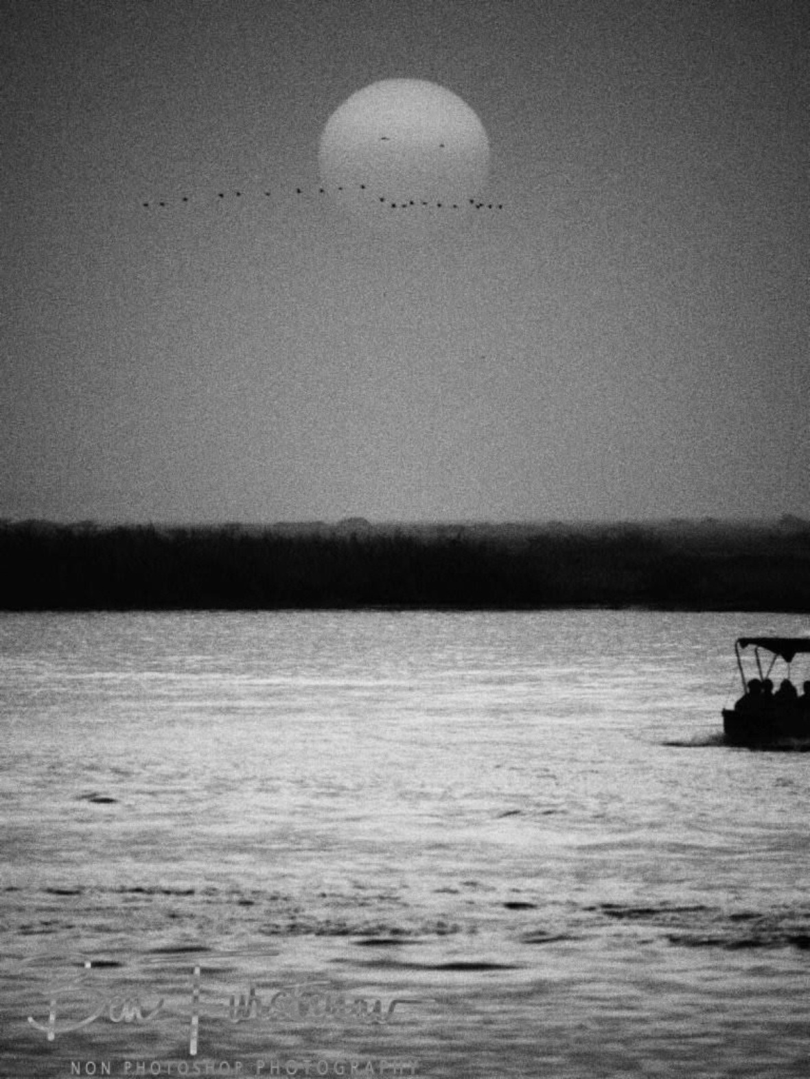 Sunset in black and white, birds passing the sun on Chobe River, Kasane, Botswana