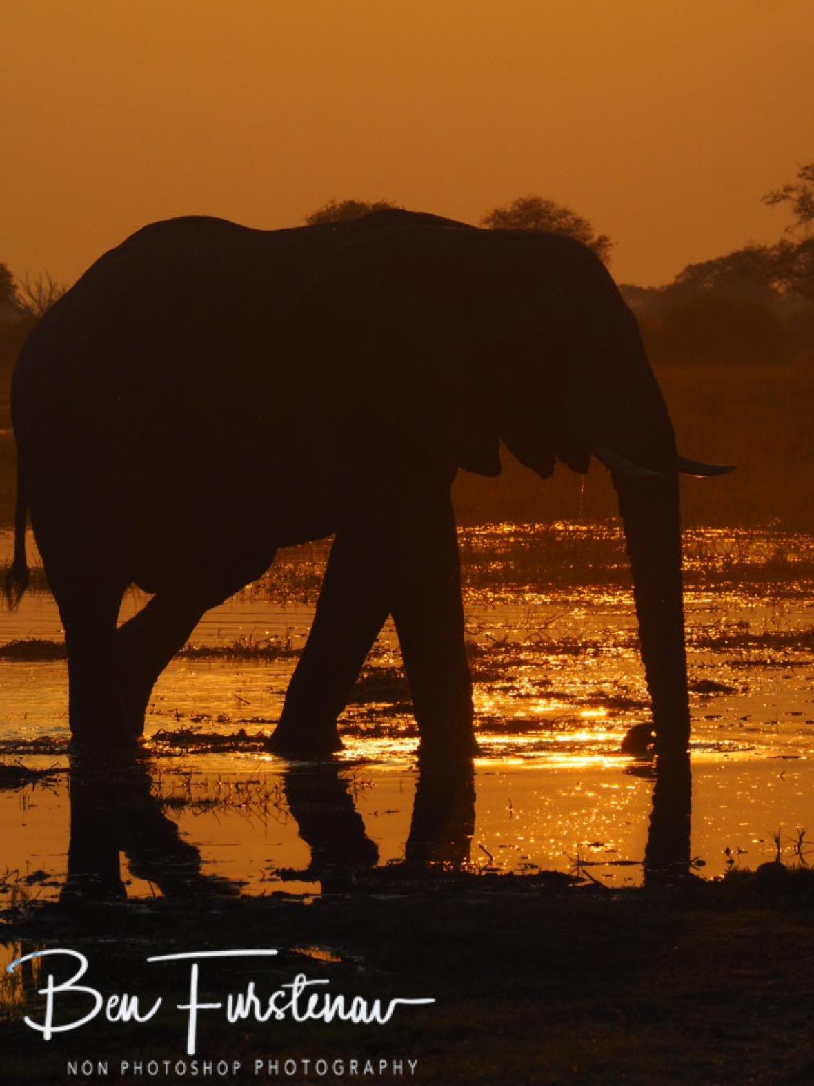 Elephantastic sunset, Kwai Region, Okavango Delta, Botswana