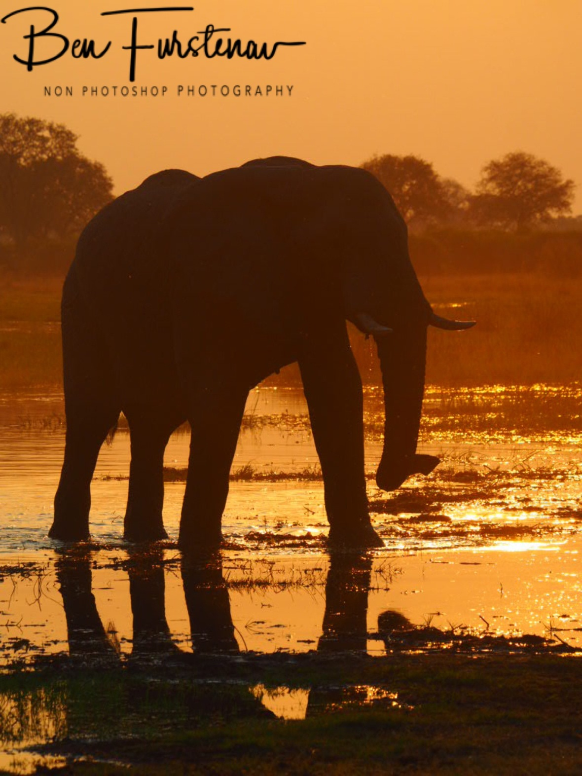 Sunset stroll along the water, Moremi National Park, Botswana